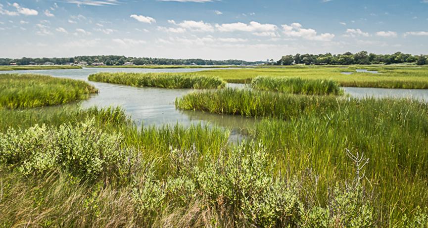 Wetland restoration, enhancement or creation